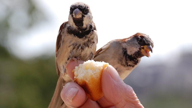 به پرنده ی خونگیم چی بدم؟
