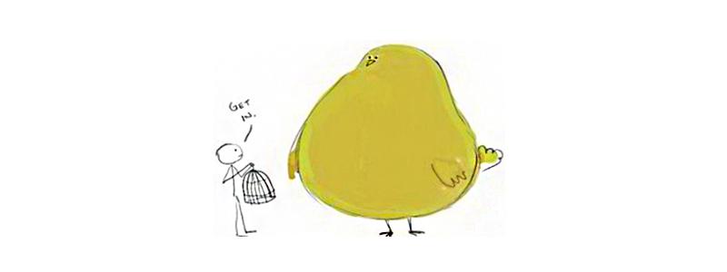 سرلاک برای رشد پرنده